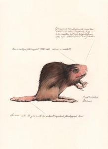 Jonas Falck – a rejected explorer's observations: bäver