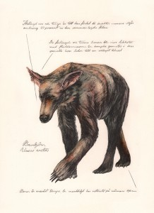 Jonas Falck – a rejected explorer's observations: brunbjörn