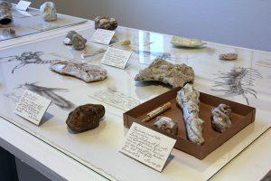 Ceramic fossil, Härnösands konsthall