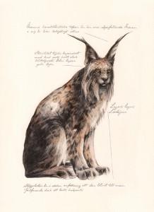 Jonas Falck – a rejected explorer's observations: lo