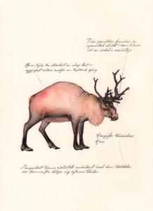 Jonas Falck – a rejected explorer's observations: ren