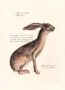 Jonas Falck – a rejected explorer's observations: skogshare