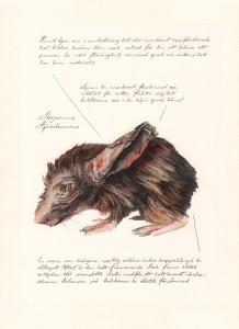 Jonas Falck – a rejected explorer's observations: skogsmus